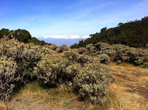 Photo: Cerca de la cima de Gunung Pangrango. Al fondo, en un día claro, se vería Gunung Salak.