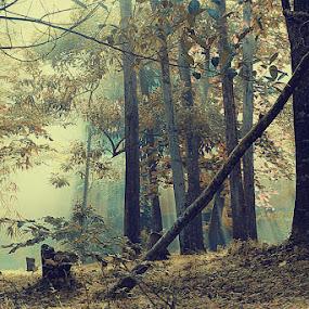 light n smoke by Harry Kegelapan - Landscapes Forests