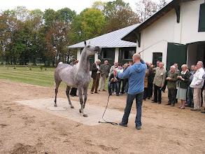 Photo: BA010144 Janow Podlaski - stadnina koni