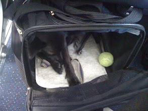 Photo: Little dog sleeping through the plane landing in Seattle