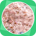 The Pink Plum Blossom icon