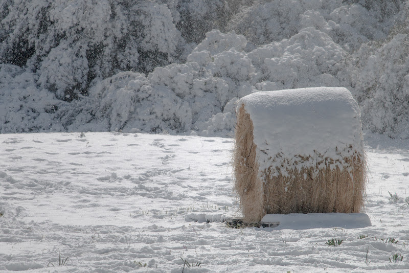 Neve&Fieno di Jiggly