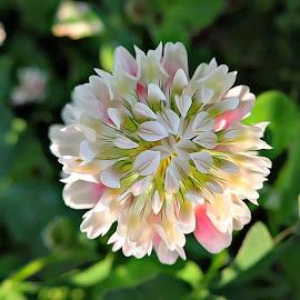 by Sara Turner - Flowers Single Flower