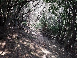 トラバース道は歩きやすい道