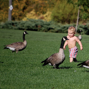 Baby and Canada Geese by Don Mann - Babies & Children Children Candids ( babies, park, canada, canadian, baby, geese, British Columbia, BC Wildlife, BC Landscapes, BC Rivers, BC Parks, BC Culture, BC, Canada, BC Nature Photography, Photography,  )