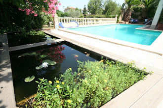 Photo: Pond with Koi Carp and Lilies, with Large Pool behind