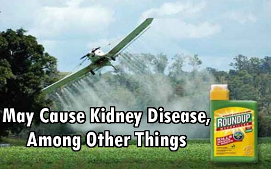 Glyphosate And Roundup's Implications On Modern Diseases