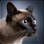 Talking Siamese Cat Icon