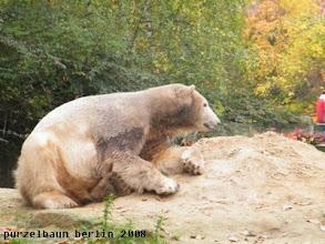 Photo: Schaut sich Knut eben in der Gegend um ;-)