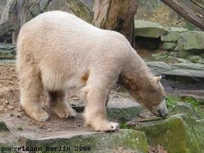 Photo: Und wenn Knut schon einmal unterwegs ist...