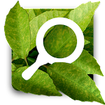 Plant Doctor Simulator Icon