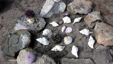 Photo: Shells everywhere,...