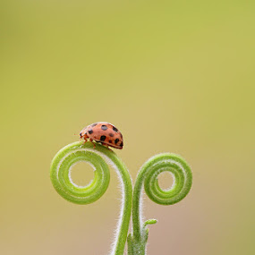 Every little step I do, I do it for you... by Monique Sjarief - Animals Insects & Spiders