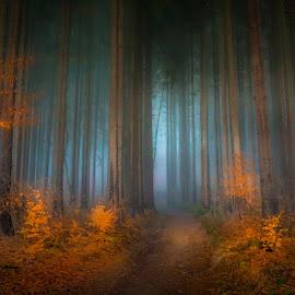 by Joško Šimic - Landscapes Forests (  )