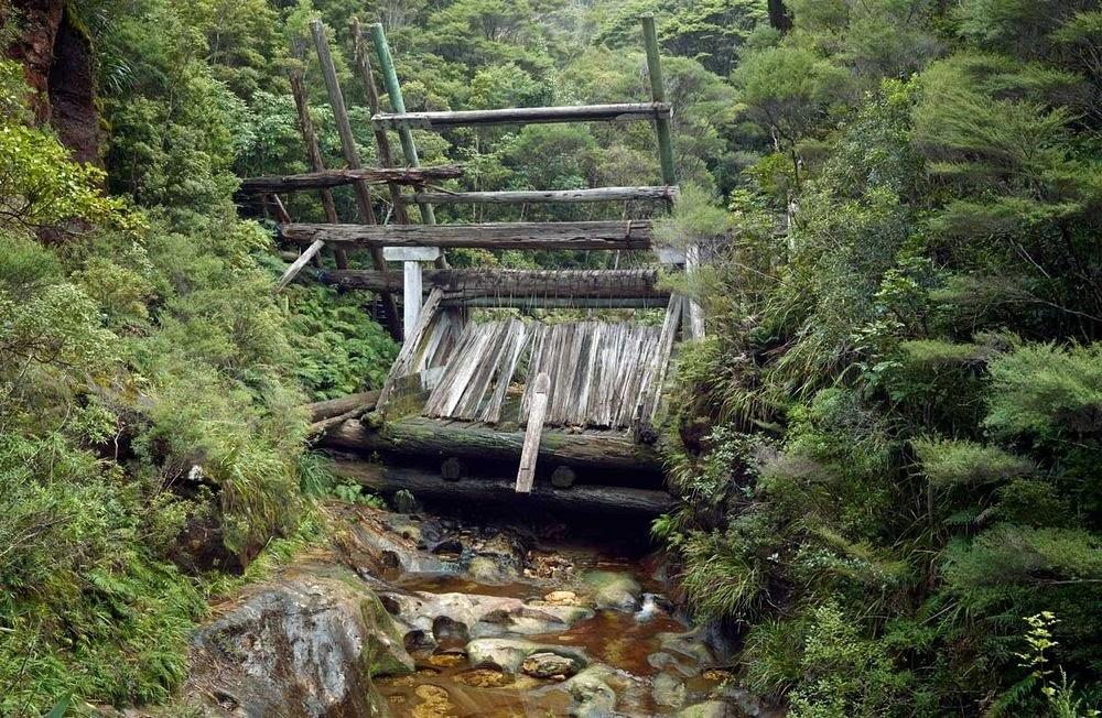 As barragens de kauri da Nova Zelândia