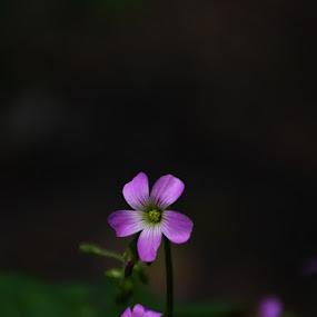 by Sanjib Laha - Flowers Flowers in the Wild
