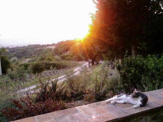 La strada e il gatto di bluebird