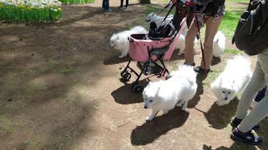Photo: 7犬兄弟?
