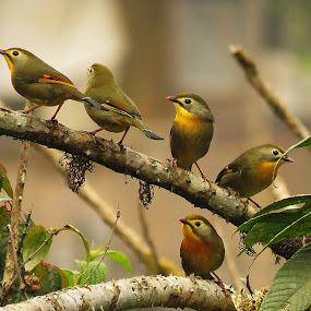 5 Star by Asim Mandal - Animals Birds