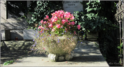 Photo: Iarba grasa (Sedum spectabile)  din Cluj-Napoca, Cimitirul Central - 2018.09.12