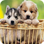 Puppy Theme C launcher APK icon