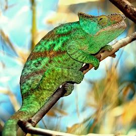 Escalade by Gérard CHATENET - Animals Reptiles