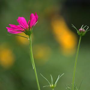 6-20-15 flower 34a.jpg