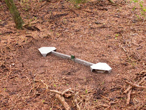 Photo: Pitfall traps with a barrier betw them.