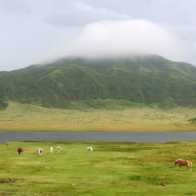 Volcano Valley by Bill Bettilyon - Landscapes Prairies, Meadows & Fields ( aso national park, japan, volcano, horses, valley )