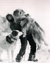 Photo: Husey y Sansón: el miembro más bajo de la expedición y uno de los perros más grandes .
