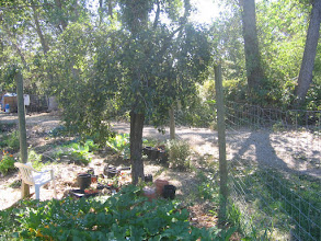 Photo: Yoga Farm, CA - garden