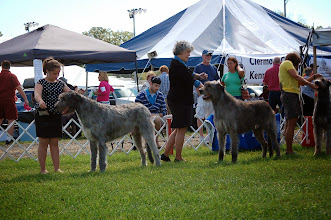 Photo: 9-08-2014 Puppy Monster with Zion and Franky with Lisa Clermont County KC, Owensville, OH Picture taken by Mary Cavanaugh Schutzman
