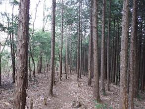 植林帯を緩やかに降りていく