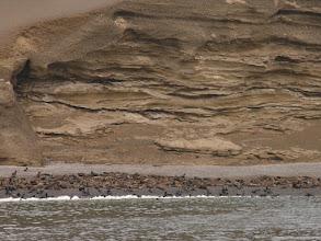 Photo: Sea lions on Isla San Gallan