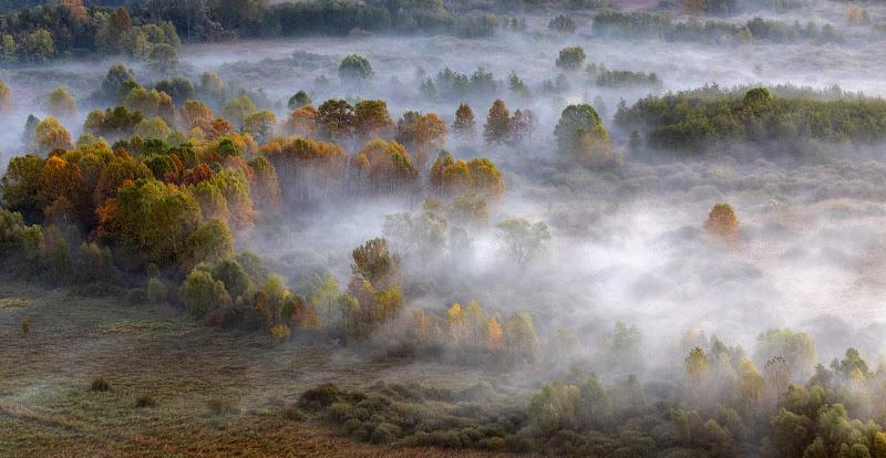 La foschia del mattino avvolge gli alberi di Aktarus