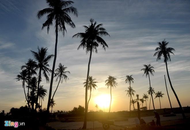 Những cây dừa cổ thụ đón ngày mới.
