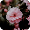 Live wallpaper - HD wallpaper icon
