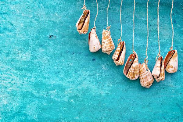 Shells di Barbara Surimi