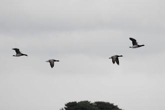 Photo: Brand Geese