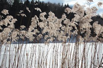 Photo: Winter am Grossensee