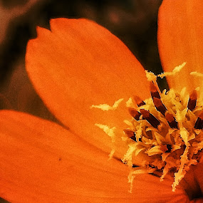 Close up by Erl de Jose - Abstract Macro ( orange flower, macro photography, nature close up, garden, flower,  )