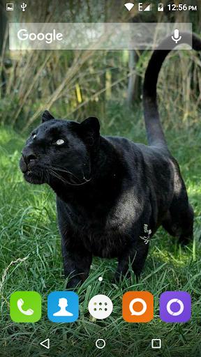 Black Panther Hd Wallpaper Apk Download Apkpure Co