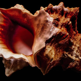 Beautiful Large Sea shell by Dave Walters - Nature Up Close Sand ( macro, nature, lumix fz2500, sea shell, colors )