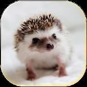 Hedgehogs Cool live wallpaper