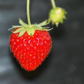 Strawberry by Mulawardi Sutanto - Food & Drink Fruits & Vegetables ( strawberry, garden, dago, travel, park, bandung )