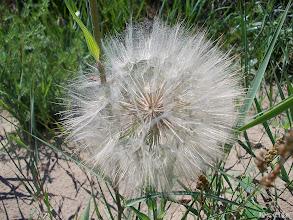 Photo: ejtőernyők a virágon