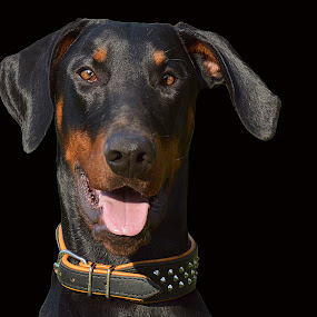 Wild thing by Daggi Meyer - Animals - Dogs Portraits