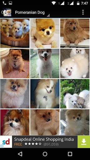 Pomeranian Dog Wallpapers Hd Apk 1 0 On Pc Mac Appkiwi Apk Downloader