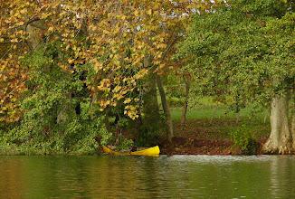 Photo: Giallo: Platani e canoa