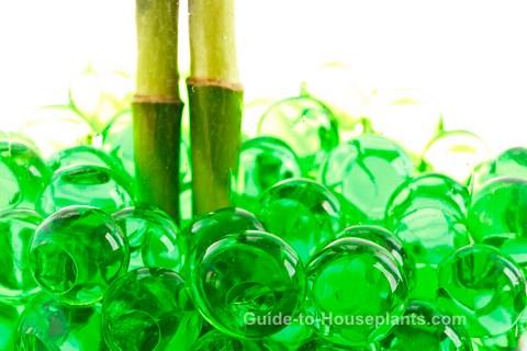 plants that grow in water, houseplants grown in water, growing plants in water